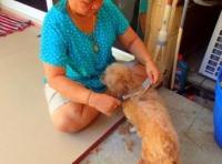 Салон красоты для собак на острове Ко Чанг